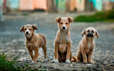 Clínica veterinaria: ¿Por qué el perro nos lame la cara?