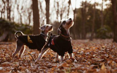 Perros en casa ¿2 mejor que 1?