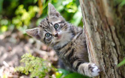 Comportamiento de los gatos ¿Por qué lo hacen?