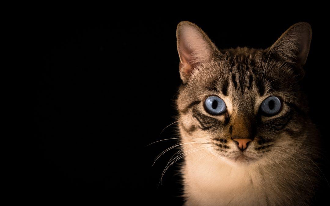 Gatos en la consulta veterinaria.