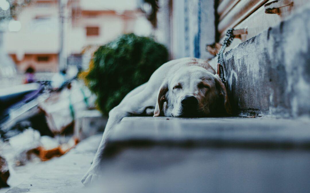 cuantas horas duerme un perro clinica veterinaria pets vitoria gasteiz