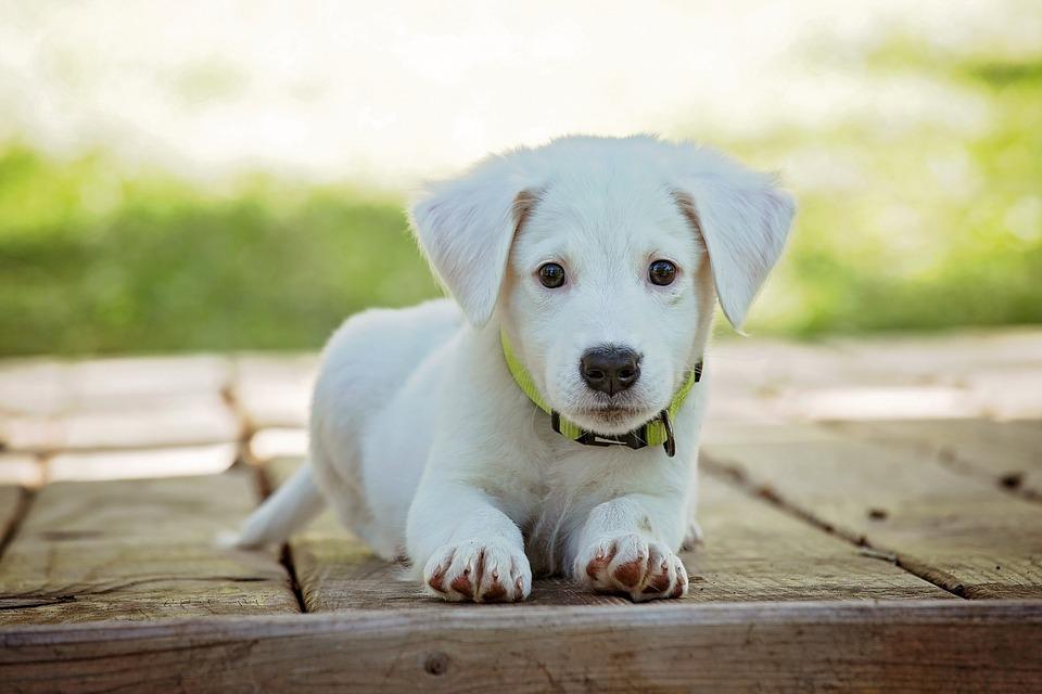 La importancia del juego en el desarrollo de los cachorros