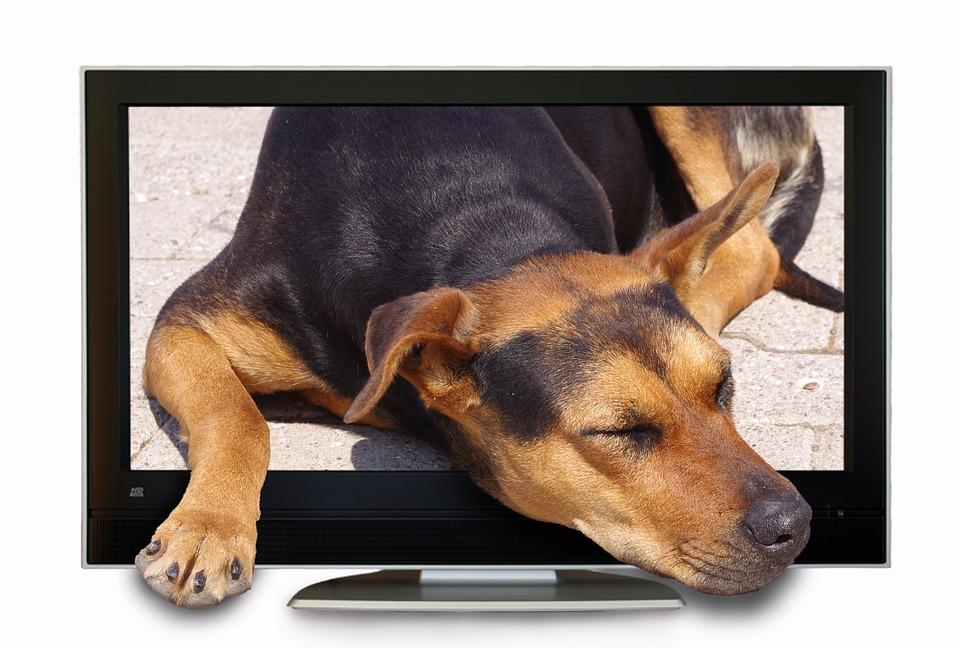 ¿Ven la televisión los perros?
